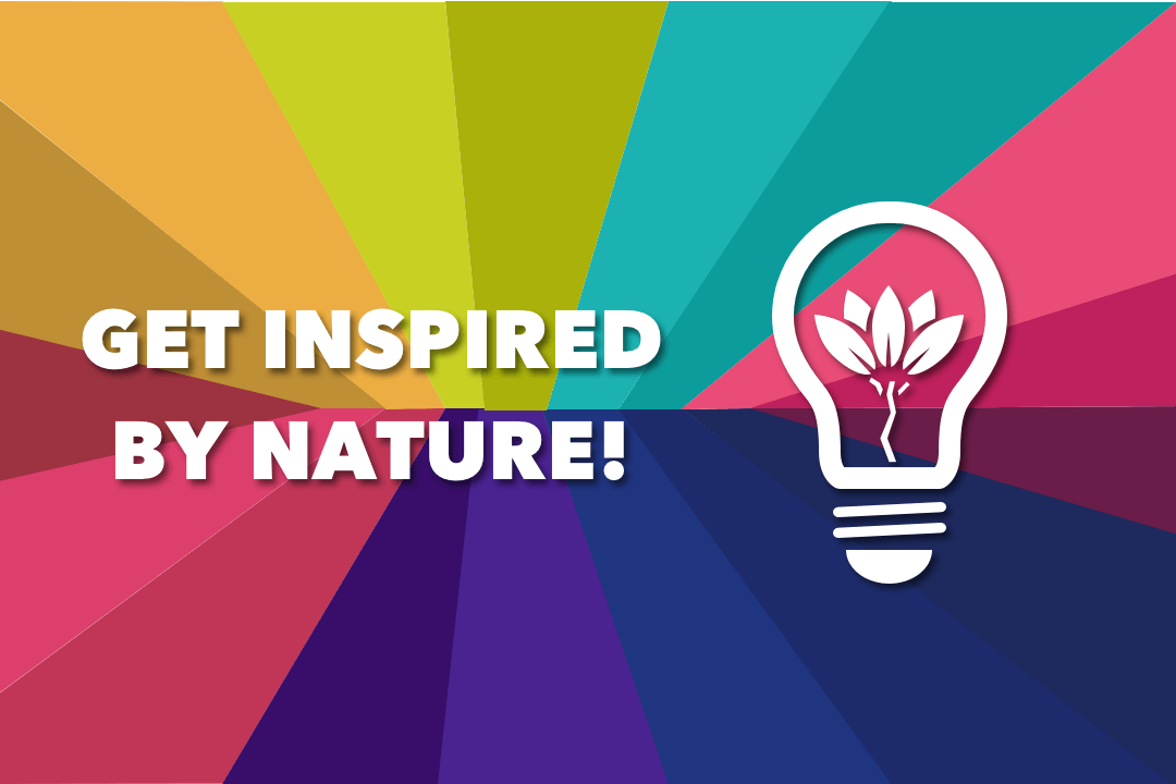 Color In Mobile App Design: The Inspiration From Nature