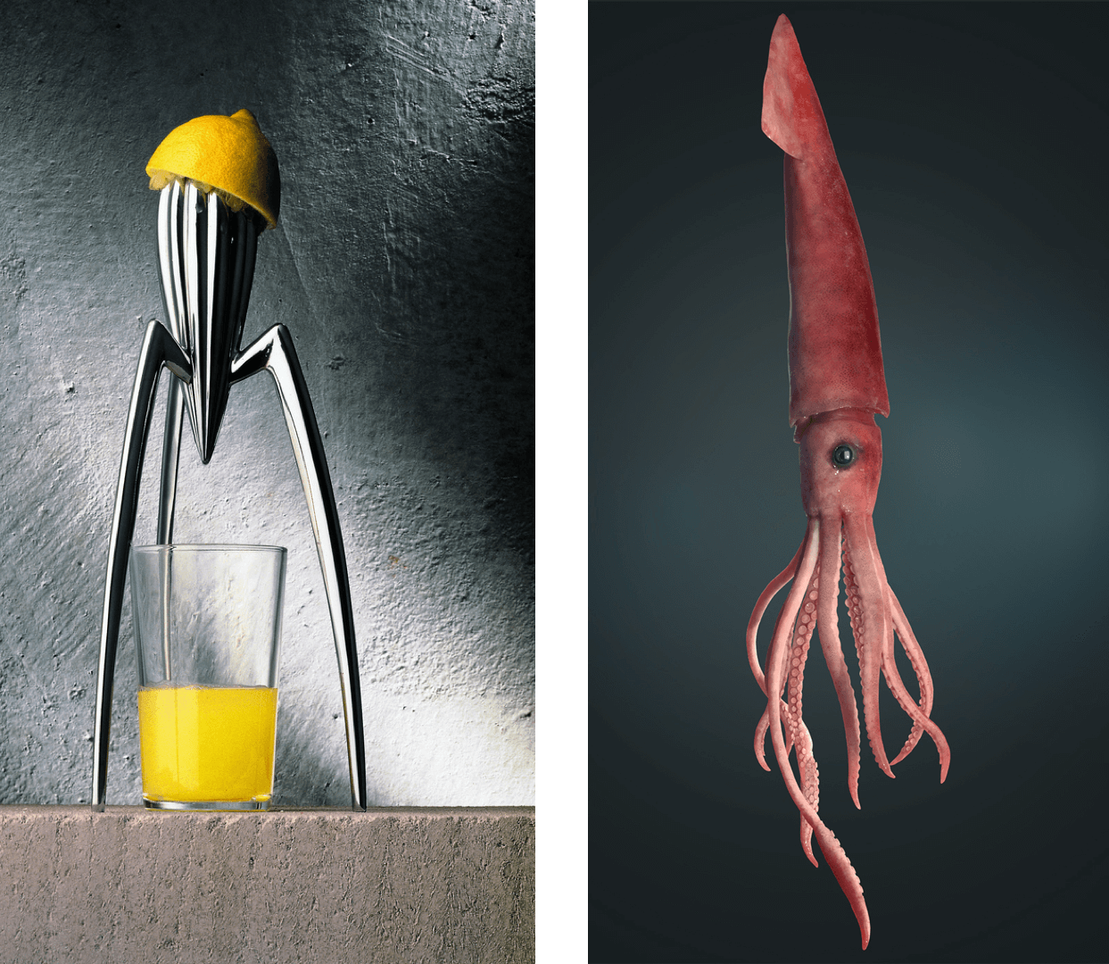philippe starck's squeezer and squid